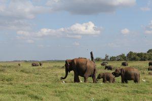 Sri Lanka – Reiseblog